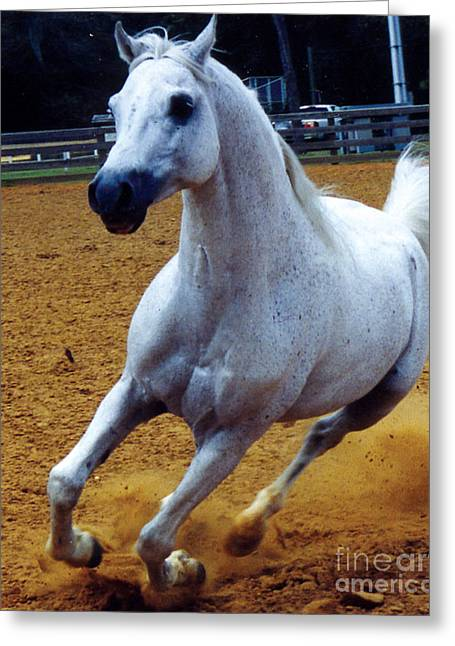 White Stallion With Rider Greeting Cards - Kaiyoum Might Greeting Card by Kryztina Spence