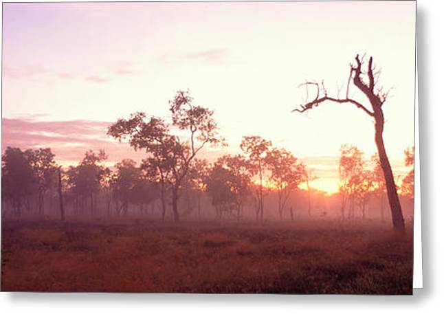 Sillouette Greeting Cards - Kakadu National Park Northern Territory Greeting Card by Panoramic Images