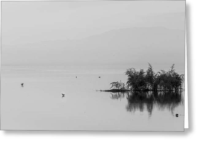 Simplistic Greeting Cards - Kakuri - Isolation Greeting Card by Peter Tellone