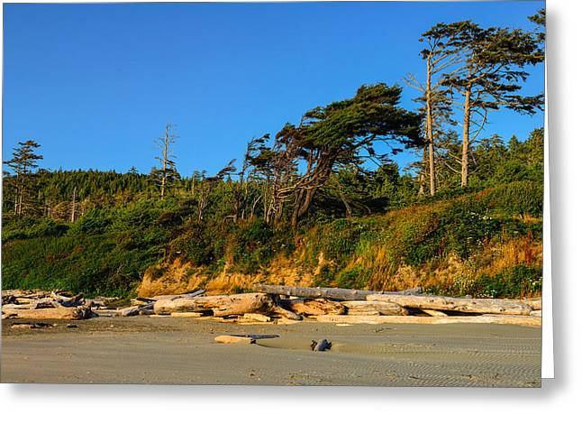 Pacific Ocean Prints Greeting Cards - Kalaloch Beach Greeting Card by Greg Norrell