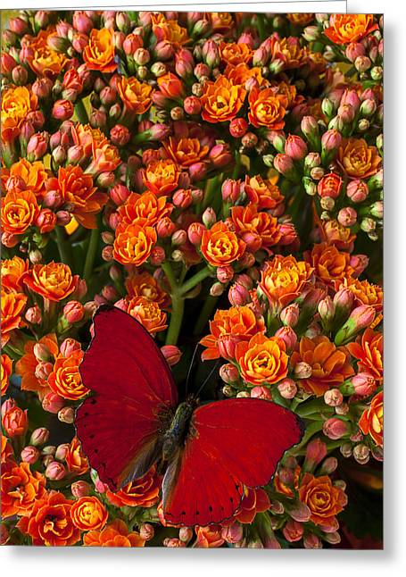 Cultivation Greeting Cards - Kalanchoe plant with butterfly Greeting Card by Garry Gay