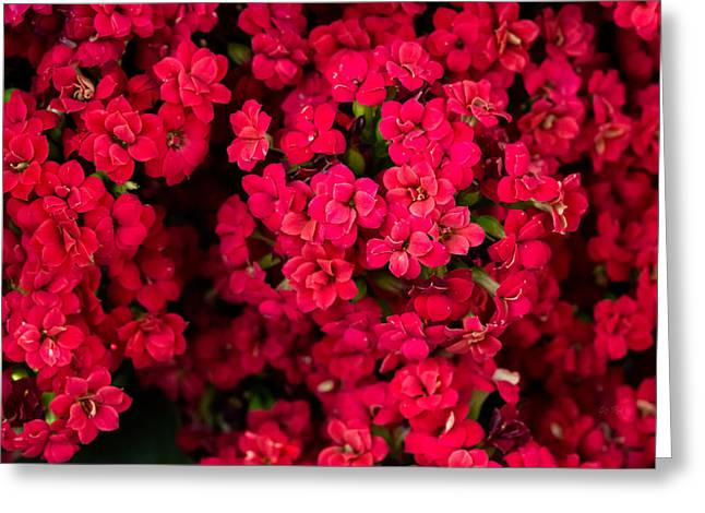 Kalanchoe Up Close And Personal Greeting Card by Eti Reid