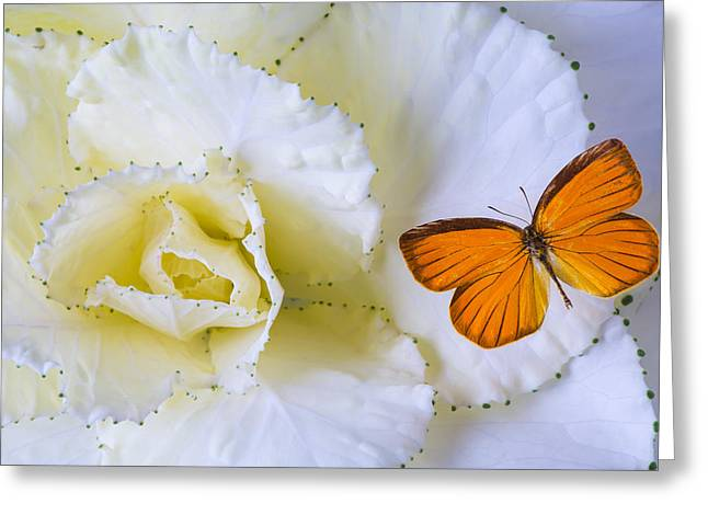 Kale Greeting Cards - Kale and orange butterfly Greeting Card by Garry Gay