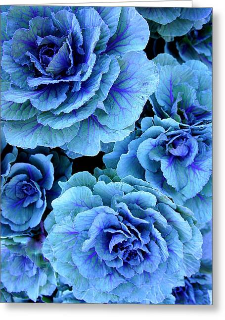 Laurie Perry Greeting Cards - Kale Greeting Card by Laurie Perry
