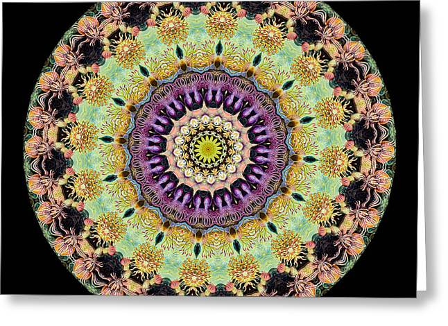 Biology Greeting Cards - Kaleidoscope Ernst Haeckl Inspired Sea Life Series Greeting Card by Amy Cicconi