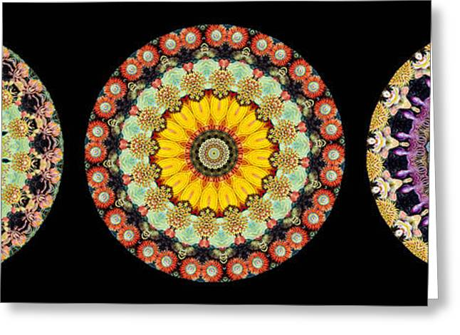 Biology Greeting Cards - Kaleidoscope Ernst Haeckl Inspired Sea Life Series Triptych Greeting Card by Amy Cicconi