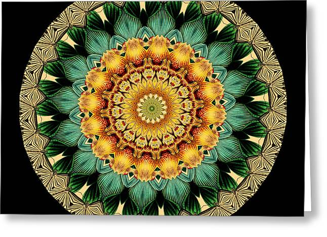 Kaleidoscope from Old Entomology Illustration of Butterflies Greeting Card by Amy Cicconi
