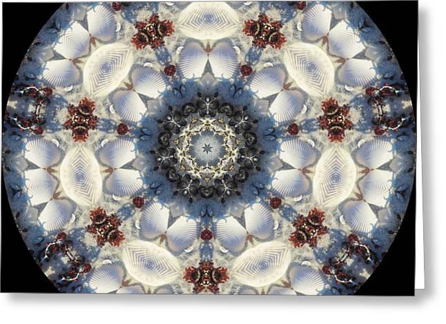 Kaleidoscope Seashells Greeting Card by Cathy Lindsey