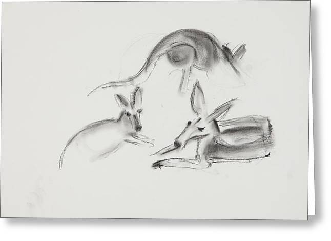 Kangaroo Drawings Greeting Cards - Kangaroo Charcoal Study #2 Greeting Card by Greg Kopriva