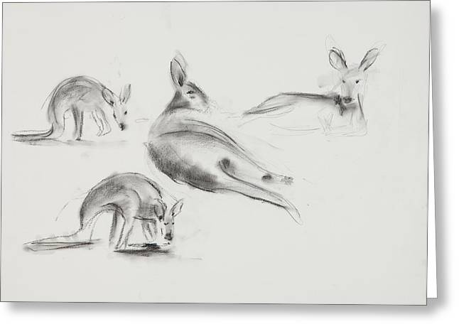 Kangaroo Drawings Greeting Cards - Kangaroo Charcoal Study #3 Greeting Card by Greg Kopriva