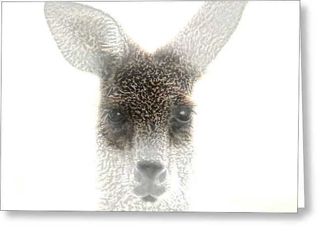 Kangaroo Digital Greeting Cards - Kangaroo Greeting Card by Holly Kempe