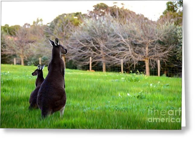 Kangaroo Digital Greeting Cards - Kangaroos Greeting Card by Phill Petrovic