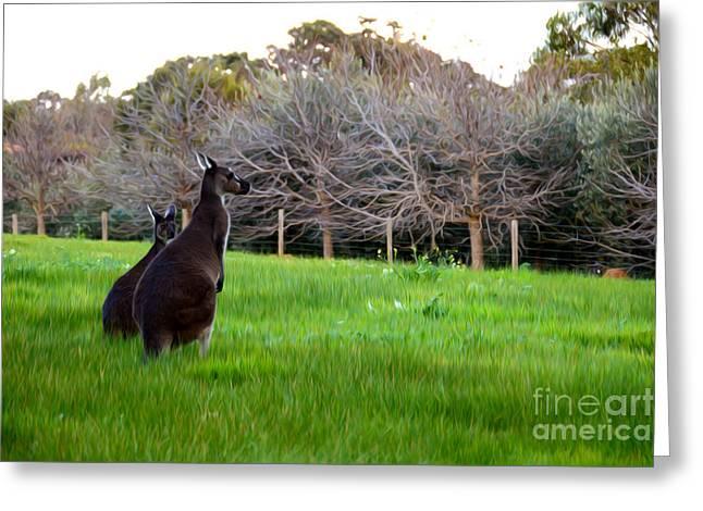 Kangaroo Digital Greeting Cards - Kangaroos Together Greeting Card by Phill Petrovic