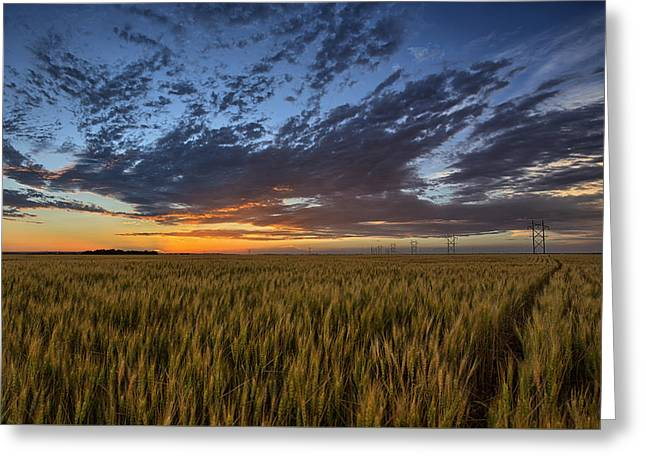 Farmers Field Greeting Cards - Kansas Color Greeting Card by Thomas Zimmerman
