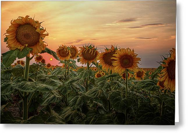 Recently Sold -  - Yellow Sunflower Greeting Cards - Kansas Van Gogh Greeting Card by Thomas Zimmerman