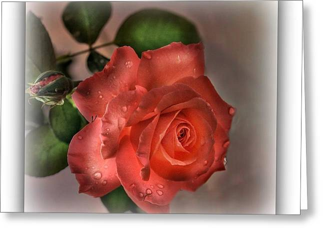 Stein Greeting Cards - Karyns Rose Rain kissed Greeting Card by Valerie Stein