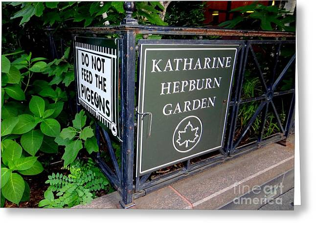 Katherine Hepburn Garden Greeting Card by Ed Weidman