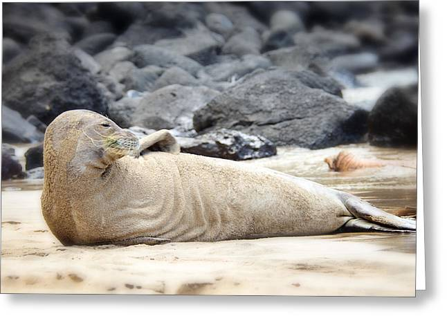 Ocean Mammals Greeting Cards - Kauai Monk Seal Greeting Card by Vicki Jauron
