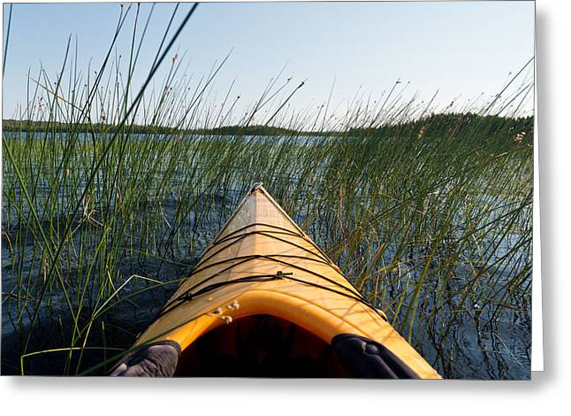 Kayaking Greeting Cards - Kayaking Through Reeds BWCA Greeting Card by Steve Gadomski