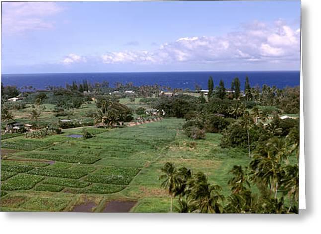 Ocean Photography Greeting Cards - Keanae Peninsula, Hana, Maui, Hawaii Greeting Card by Panoramic Images