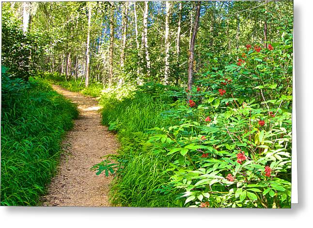 Keen-eye Nature Trail In Kenai National Wildlife Refuge In Soldotna-ak Greeting Card by Ruth Hager