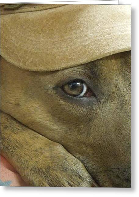 Apbt Greeting Cards - Keep One Eye Open Greeting Card by Renee Trenholm
