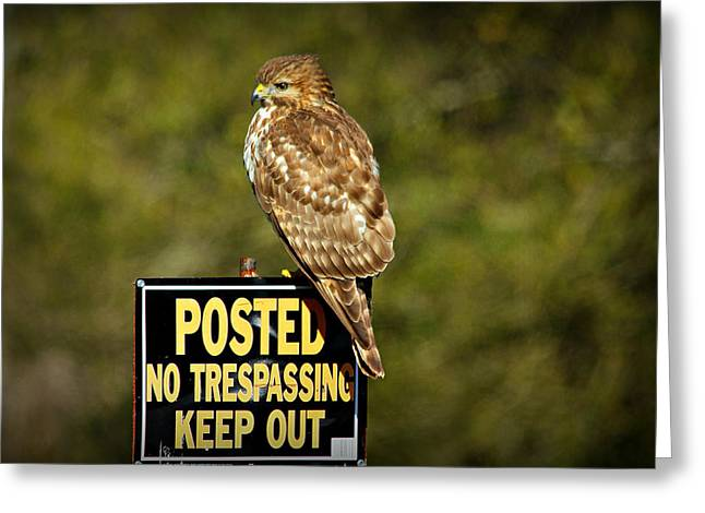 Hunting Bird Greeting Cards - Keep Out Greeting Card by Reid Callaway
