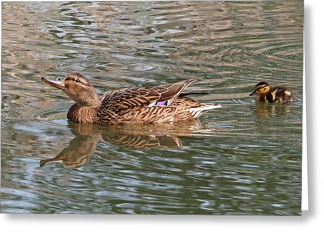 Ducklings Greeting Cards - Keep Up Greeting Card by Gill Billington