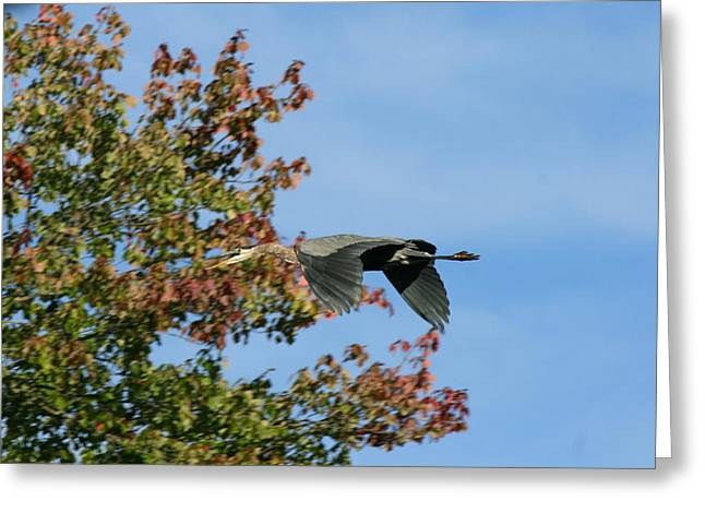 Bird Photography Greeting Cards - Keep Your Distance Greeting Card by Neal  Eslinger