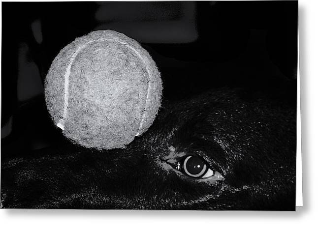 Keep Your Eye On The Ball Greeting Card by Roger Wedegis