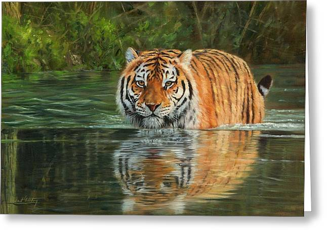 Big Cat Print Greeting Cards - Keeping Cool Greeting Card by David Stribbling