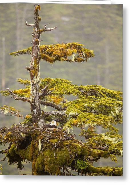 Temperate Rain Forest Greeting Cards - Keeping the Eggs Warm Greeting Card by Tim Grams