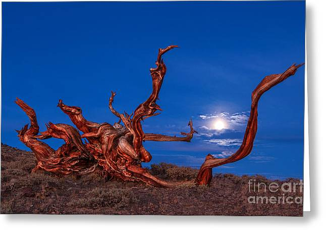 Moonrise Greeting Cards - Keeping Time - Moonrise view of the Ancient Bristlecone Pine Forest. Greeting Card by Jamie Pham