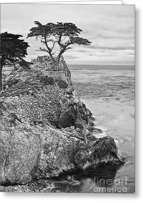 Foggy Beach Greeting Cards - Keeping watch - famous Lone Cypress tree at Pebble Beach in Monterey California in Black and White Greeting Card by Jamie Pham