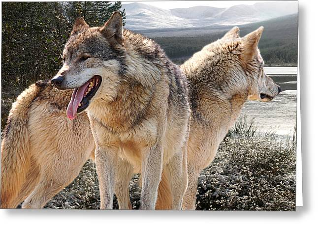On Guard Greeting Cards - Keeping Watch - Pair of Wolves Greeting Card by Gill Billington