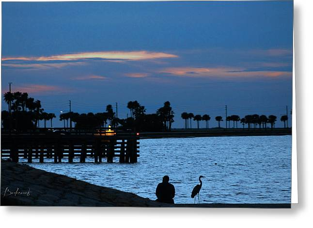 St Petersburg Florida Greeting Cards - Keeping Watch Greeting Card by Robin Lewis