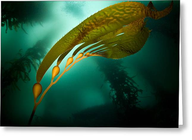 Kelp Forest Greeting Cards - Kelp Forest Greeting Card by Ethan Daniels
