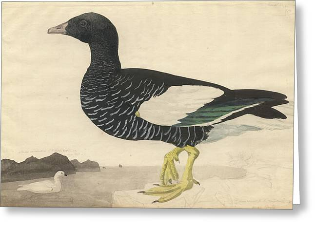 Kelp Goose Greeting Card by Natural History Museum, London