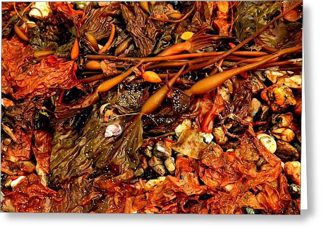 Kelp Greeting Cards - Kelp Shore Greeting Card by Bruce J Robinson