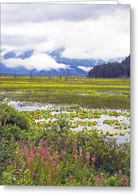 Kenai Lake Greeting Cards - Kenai Lake Greeting Card by Saya Studios