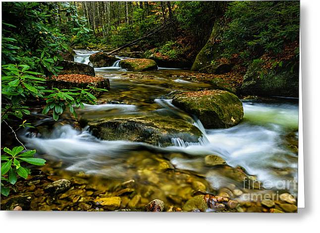 Rhododendron Maximum Greeting Cards - Kens Creek Cranberry Wilderness Greeting Card by Thomas R Fletcher
