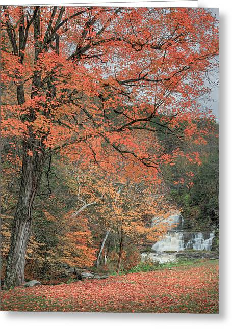 Kent Falls Greeting Cards - Kent Falls Maple Tree Greeting Card by Bill  Wakeley