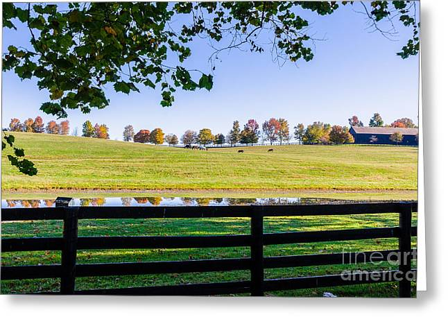 Paris Trees Nature Scenes Greeting Cards - Kentucky Horse Farm Greeting Card by Mary Carol Story