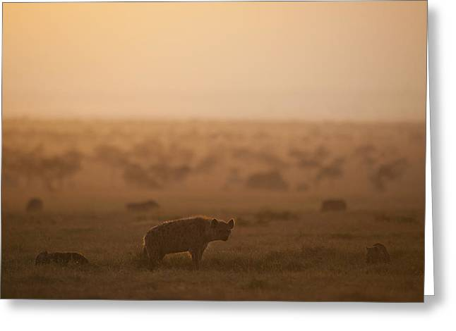 Simple Beauty In Colors Greeting Cards - Kenya, Hyena With Cubs At Dawn In Ol Greeting Card by Ian Cumming