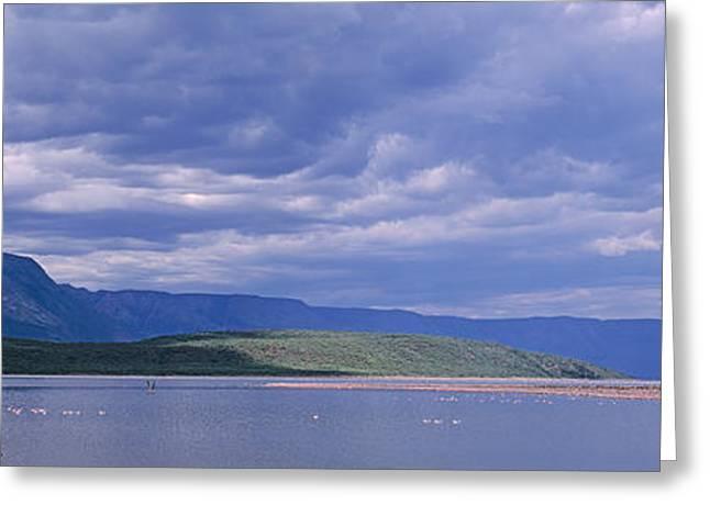 Flocks Of Birds Greeting Cards - Kenya, Lake Bogoria, Panoramic View Greeting Card by Panoramic Images
