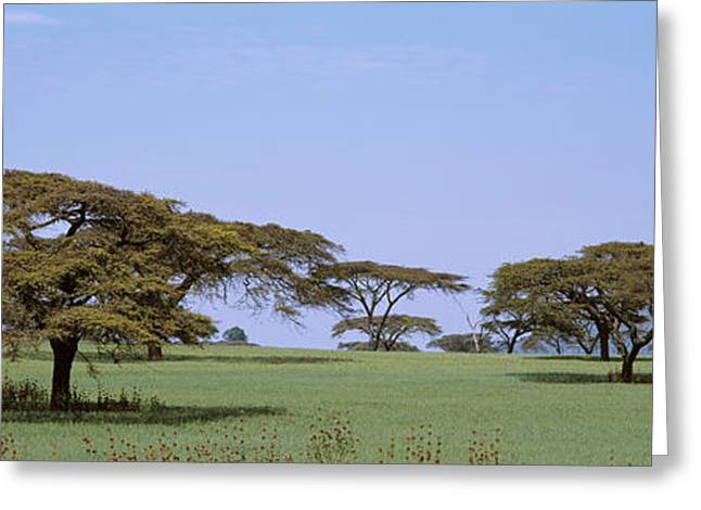 Pasture Scenes Greeting Cards - Kenya, View Of Trees In Flat Grasslands Greeting Card by Panoramic Images