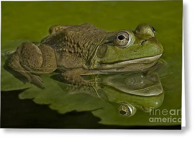 Cold Blooded Greeting Cards - Kermit Greeting Card by Susan Candelario