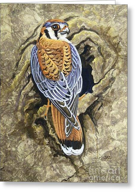 Amate Bark Paper Greeting Cards - Kestrel Nesting Greeting Card by Anne Shoemaker-Magdaleno