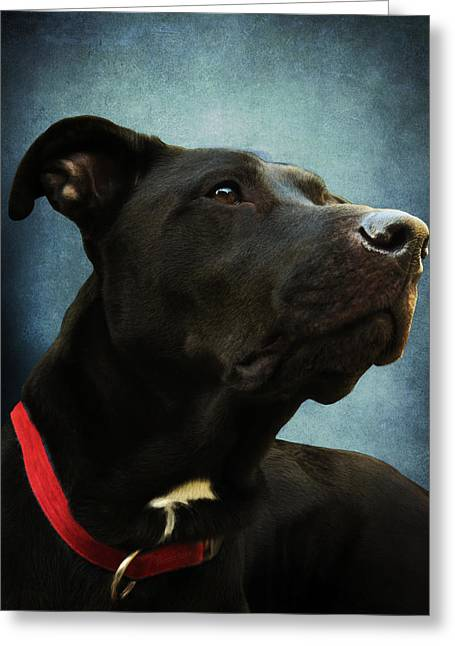 Mixed Labrador Retriever Greeting Cards - Kettles the Majestic Greeting Card by Shawna  Rowe