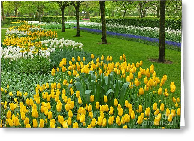 Mike Nellums Greeting Cards - Keukenhof Gardens 93 Greeting Card by Mike Nellums
